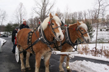 Carriage Rides at the JMU Arboretum