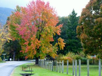 Fall Foliage Driving Tour