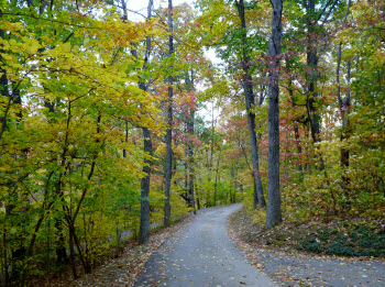 Fall Foliage at Cabin Creekwood
