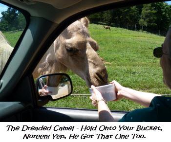 Greedy Camel