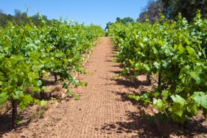 wintergreen winery